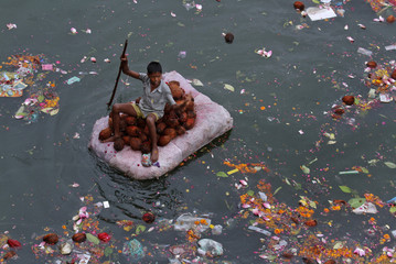 A boy ferries coconuts thrown in as offerings by worshippers in the waters of the river Sabarmati in Ahmedabad