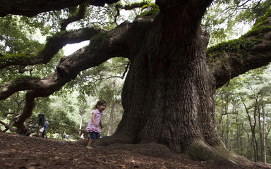 Soleil Pines of Charleston plays under the branches of the Angel Oak tree in Charleston, South Carolina