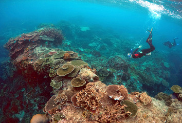 Peter Gash snorkels with Oliver Lanyon and Lewis Marshall during an inspection of the reef's condition in an area called the 'Coral Gardens' located at Lady Elliot Island located north-east from the town of Bundaberg in Queensland