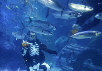 A diver dressed in a skeleton costume for Halloween feeds fishes inside a fish tank at the Sea Life aquarium in Berlin