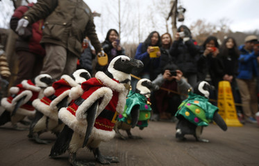 Visitors take photographs of penguins wearing Santa Claus and Christmas tree costumes in Yongin