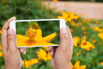 man holding smartphone taken floral yellow blooming photo