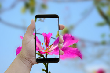 Hand holding smartphone pink floral image on screen display