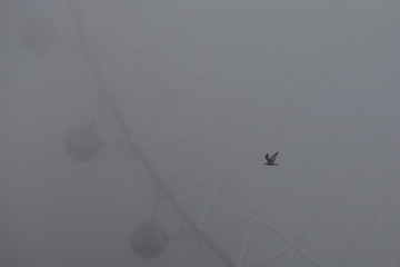 A seagull flies past the London Eye during a foggy day in central London