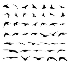 Flying birds and silhouettes on white background. Vector illustration. isolated bird flying.