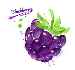 Watercolor illustration of blackberry