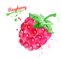 Watercolor illustration of raspberry