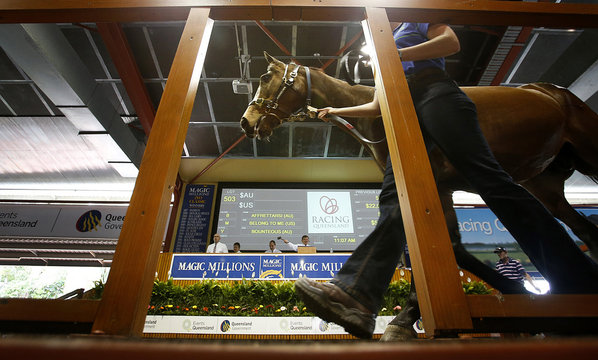 A handler guides a horse on stage at the Magic Millions sales complex on Australia's Gold Coast