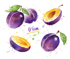 Watercolor illustration of plum