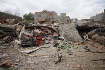 A cat sits in front of the wreckage of a house destroyed by an air strike last year that was targeting al Qaeda-linked militants, in the southern Yemeni town of Jaar