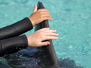Patients from Rady Children's Hospital touch the dorsal fin of a bottlenose dolphin after being invited to swim and interact with dolphins at Sea World in San Diego