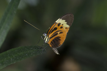 Butterfly 2017-38 / Butterfly on a leaf