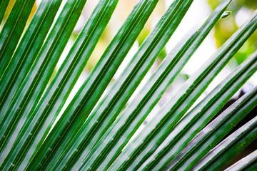 Thailand. Palm leaves