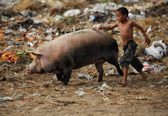 A boy chases a pig through a junkyard near the Danyingone station in Yangon's suburbs