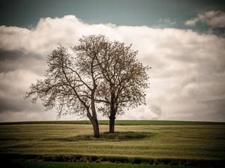 Obstbäume im Feld