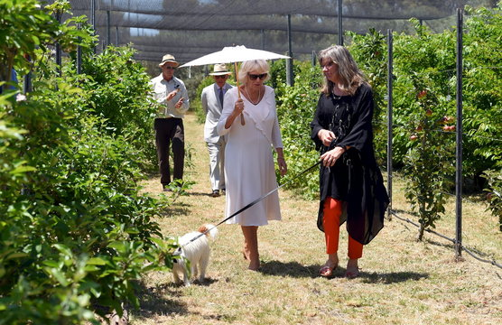 Britain's Prince Charles and Camilla the Duchess of Cornwall tour the orchard at Oranje Tractor Wines with owners Murray Gomm and Pamela Lincoln in Albany, Western Australia