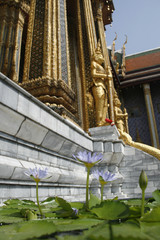 Lotus flowers float in a vase at the entrance of the library Phra Mondop situated in the middle of Wat Phra Kaeo at the Royal Palace in Bangkok