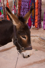 Close up of the head of a donkey in front of a souvenir stand in Petra Jordan. The donkey is used to transport tourists through the ancient Nabatean city. He wears a halter and is seen in profile.