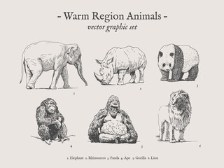 Warm region animals drawings set on grey background with elephant, rhino, panda, ape, gorilla, lion