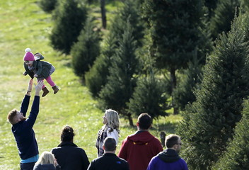 Conor Brandquist tosses his one-year old daughter Taylor in the air while tree hunting at Snickers Gap Christmas Tree Farm in Virginia