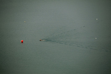 A man swims in a lake to cool off on a hot summer day in Castel Gandolfo, south of Rome