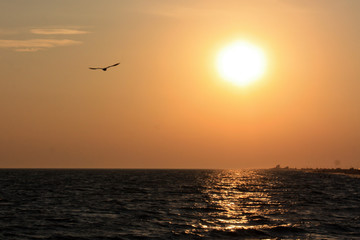 Seagull flying over the sea on the background of sunset