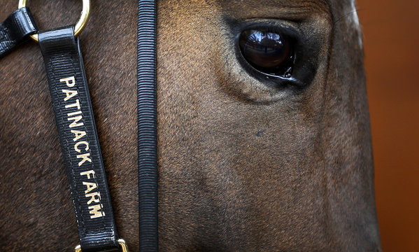 A horse walks on stage at the Magic Millions sales complex on Australia's Gold Coast