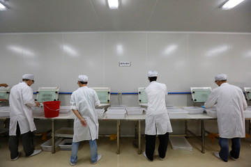 """Lab technicians work at a """"sex separation area"""" inside Sun Yat-Sen University-Michigan State University Joint Center of Vector Control for Tropical Disease in Guangzhou, China"""