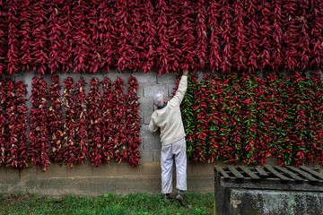 A man puts a bunch of paprika on the wall of his house to dry in the village of Donja Lakosnica