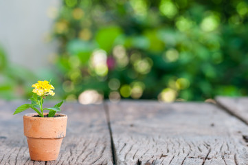 Minimal young green in pot on the table with bokeh background
