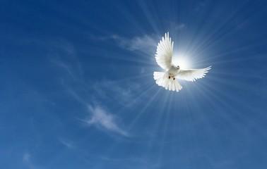 Himmel mit Friedenstaube in Sonne