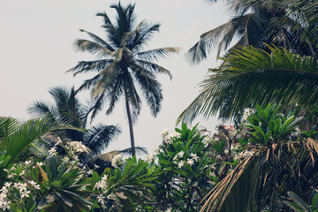 Palm trees on tropical coast background.