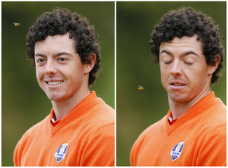 A combination photo shows a bee buzzing European team golfer McIlroy during a team photo at the 39th Ryder Cup golf matches at the Medinah Country Club