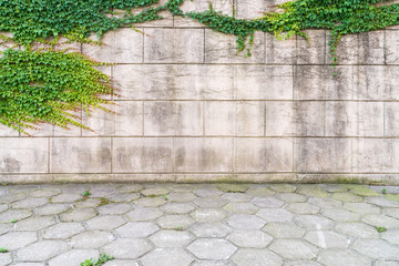 ivy on wall with concrete floor