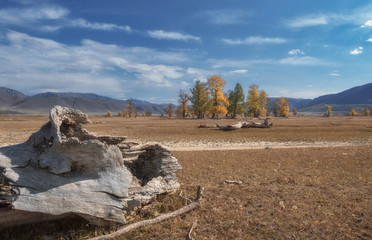 Old tree trunks lying on the background of the autumn landscape