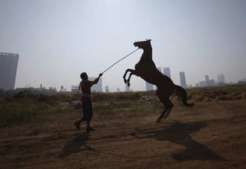 A groom holds his horse as it rears up after working out on the track, during early morning workouts for the upcoming Derby race in Mumbai