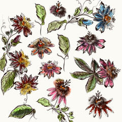 Big collection of retro style flowers. Botanical illustration design