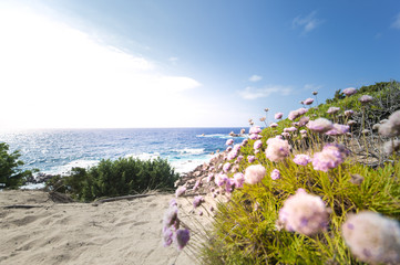 Small pathway to the beach surrounded by beautiful pink flowers. (selective focus)