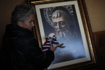 A woman holds her dog next to a picture of San Anton after it was blessed by a priest outside San Anton church in Churriana