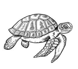 Hand drawn sea turtle
