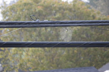 Spider web between two power lines