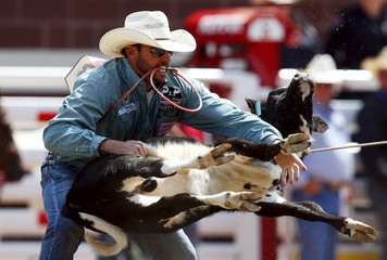 Swor of Chico, Texas flips a calf in the Tie-Down Roping event during the Calgary Stampede rodeo in Calgary.