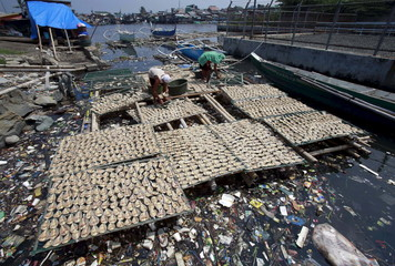 Workers collect dried fish from a plastic fish drying mesh placed over a polluted river in Navotas city, north of Manila