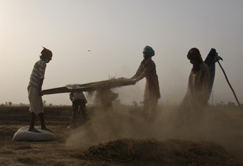 Farmers sift dust out of spinach seeds at a field in the outskirts of Faisalabad