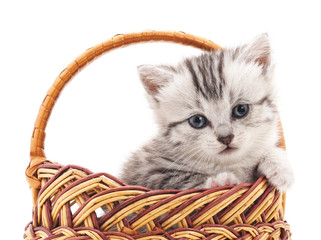 Little kitten in the basket.
