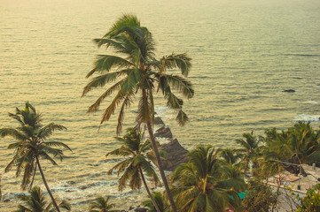 Palm trees in the rays of the sunset in the background the Arabian Sea