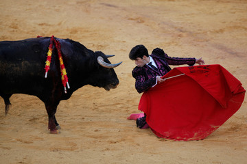 "Spanish bullfighter Lopez Simon faces a bull during a ""Corrida Goyesca"" bullfight in Ronda"