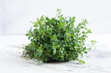 Bouquet of thyme on white background