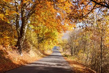 Fototapeta droga w lesie na jesień obraz