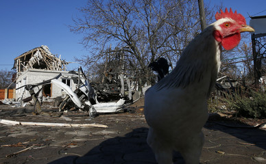 A chicken walks near a residential block and a car damaged by recent shelling in Donetsk